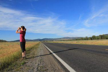 Bison-watching in Grand Teton National Park