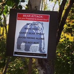 Bear Aware (Instagram @christineblau)
